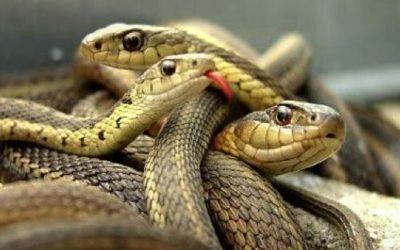 son%cc%83ar-con-serpientes