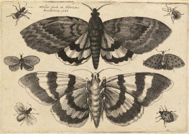 mariposasnocturnas
